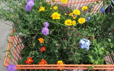 Quelles utilités pour un chariot de jardin ?