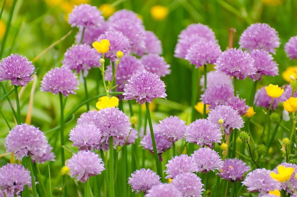 Jardiner est une passion qui touche tous les âges