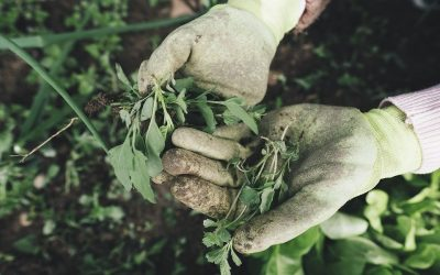Comment entretenir son compost?